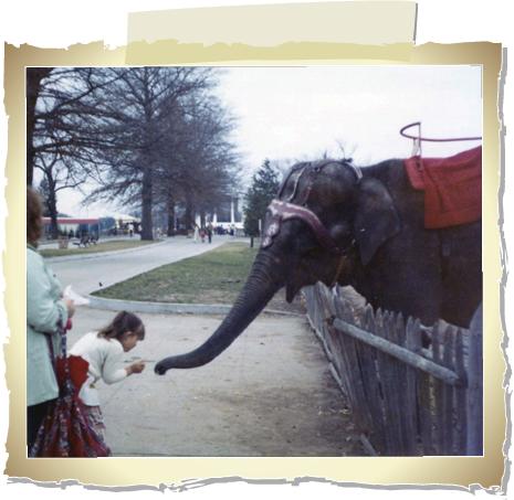 Frame.feedtheelphant