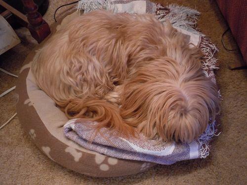 aww, sleepy dog
