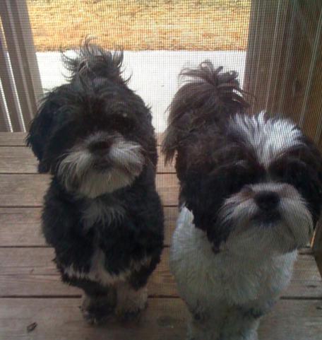 aww, puppies