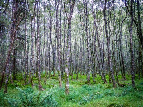 magic trees in glandalough ireland