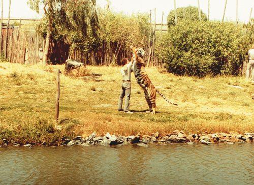 Tigerguy